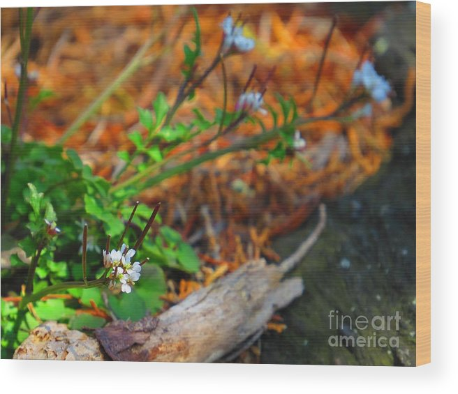 Flora Wood Print featuring the photograph White Green Gold by Rrrose Pix