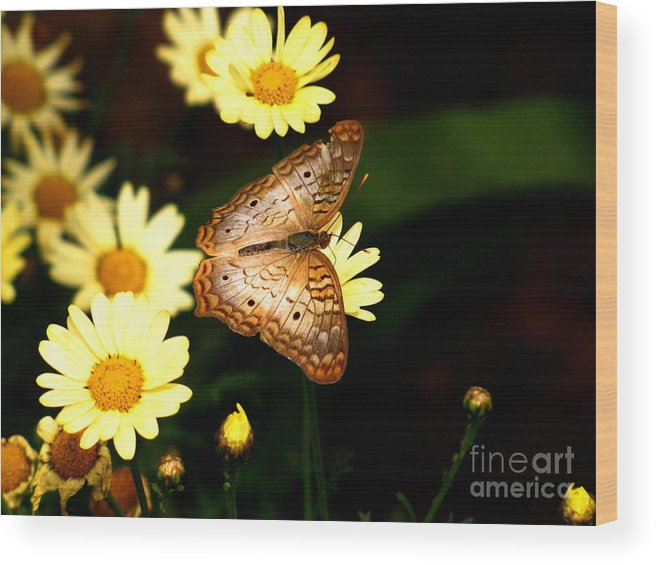 White Peacock Butterfly Wood Print featuring the photograph White Peacock Butterfly by Marilyn Smith