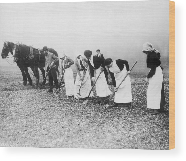 1035-842 Wood Print featuring the photograph Women Learning Farming by Underwood Archives