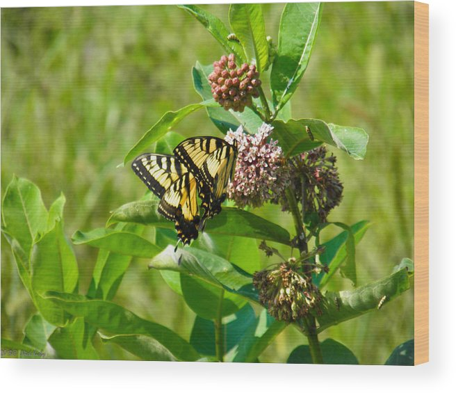 Yellow Wood Print featuring the photograph Yellow Butterflies by Nick Kirby