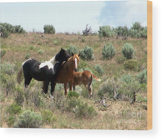Young Wild Horse Band Wood Print featuring the photograph Young Mustang Band by Craig Downer