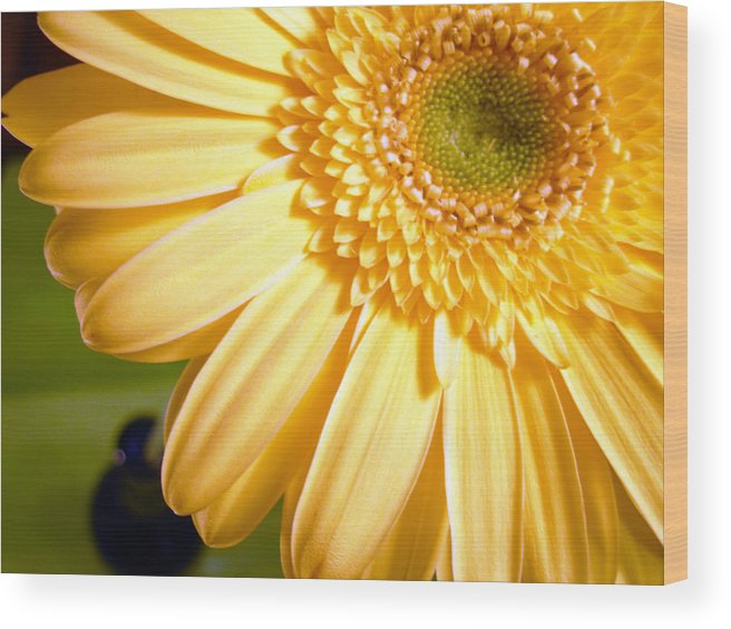 Gerbera Photographs Wood Print featuring the photograph 0741.2 by Kimberlie Gerner
