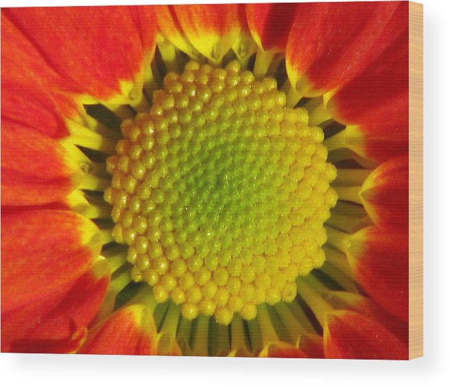 Flower Wood Print featuring the photograph Bee's View by Paul Slebodnick