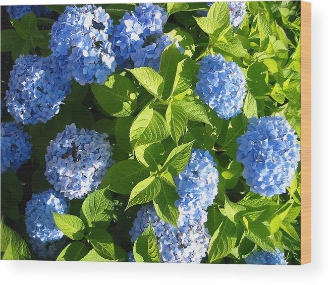 Hydrangea Wood Print featuring the photograph Hydrangea by Sarah Gayle Carter