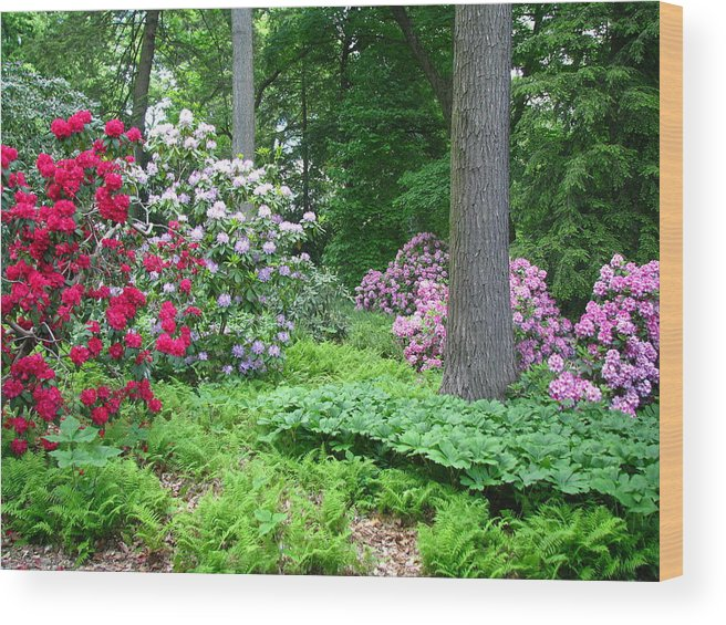 Flower Wood Print featuring the photograph Spring Forest by Paul Slebodnick