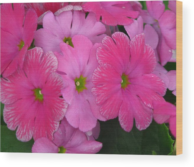 Flower Wood Print featuring the photograph Pink Dream by Paul Slebodnick