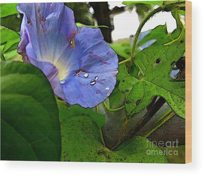 Botanical Wood Print featuring the digital art Aging Morning Glory by Debbie Portwood
