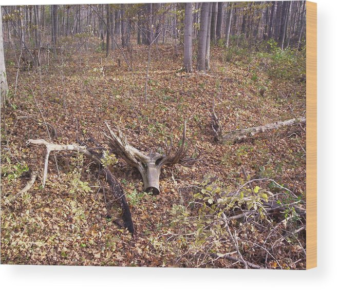 Tree Wood Print featuring the photograph Antler Log by Corinne Elizabeth Cowherd