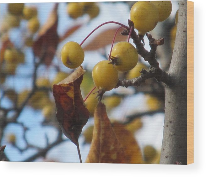 Nature Wood Print featuring the photograph Autumn Berry Branch by Loretta Pokorny