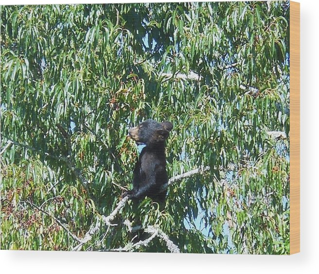 Cades Cove Wood Print featuring the photograph Baby Bear by Linda Labadorf