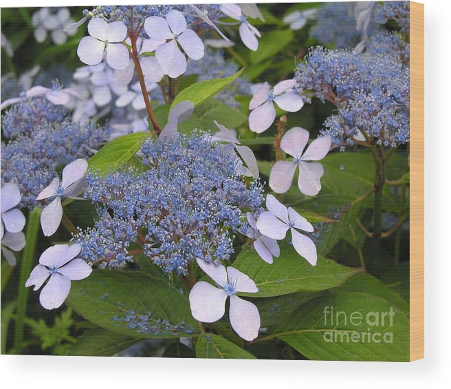 Blue Wood Print featuring the photograph Blue by Diane Greco-Lesser