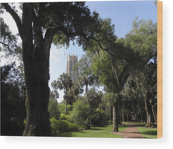 Botanical Wood Print featuring the photograph Botanical Gardens Florida by Kim Galluzzo Wozniak