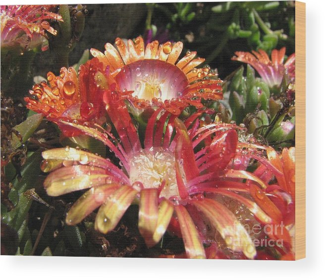 Photography Wood Print featuring the photograph Bright And Beautiful by Michelle H