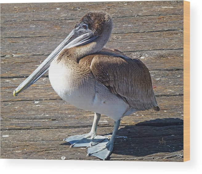 Nature Wood Print featuring the photograph Brown Pelican by Marie Morrisroe