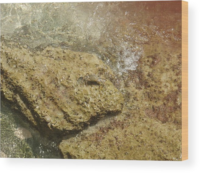 Crabs Wood Print featuring the photograph Camouflage Crabs by Kimberly Perry