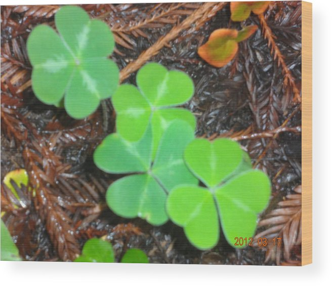 Clovers Wood Print featuring the photograph Clovers In The Woods by Terry Gentry