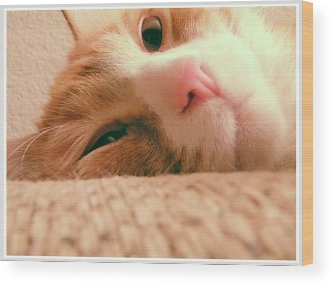 Cat Wood Print featuring the photograph Day Dreaming by Kaleigh Morgan
