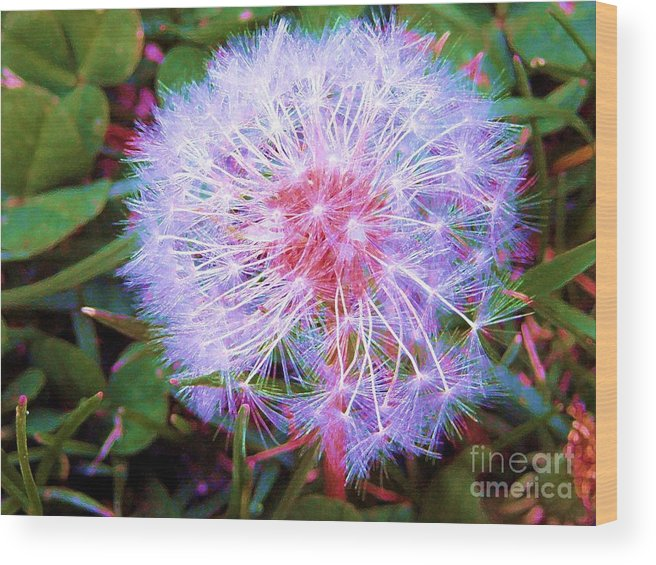 Dandelion Wood Print featuring the photograph Delicate Wonders by Susan Carella