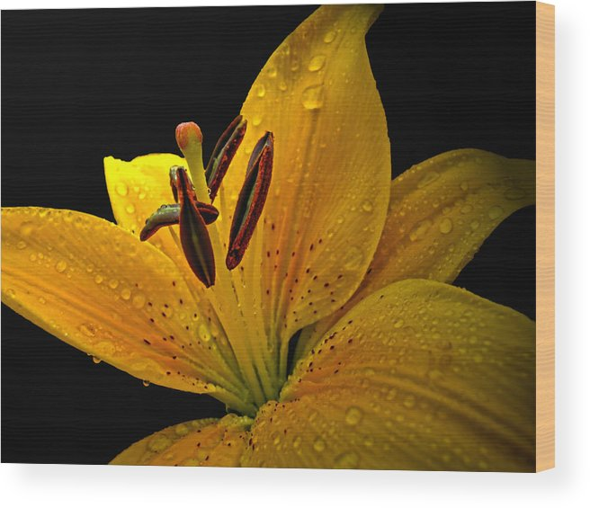 Nature Wood Print featuring the photograph Dew On The Daylily by Debbie Portwood