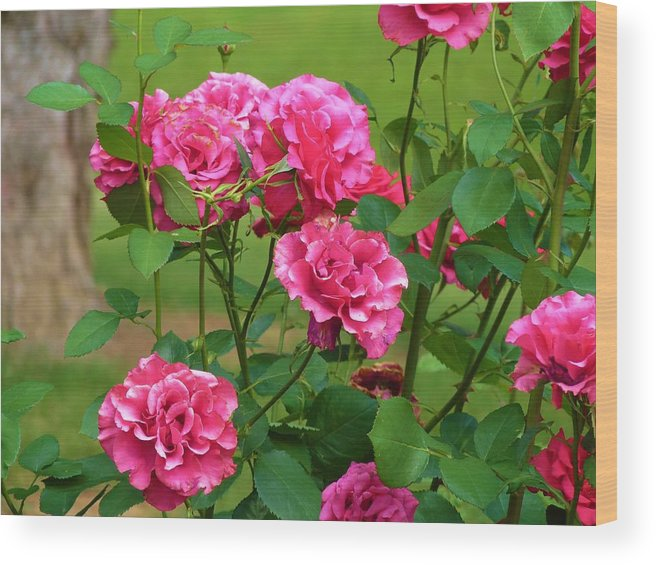 Flowers Wood Print featuring the photograph Double Roses by Jeanette Oberholtzer