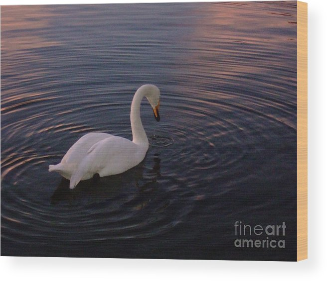 Swan Wood Print featuring the photograph Dusk Swan by Leanna Rosato