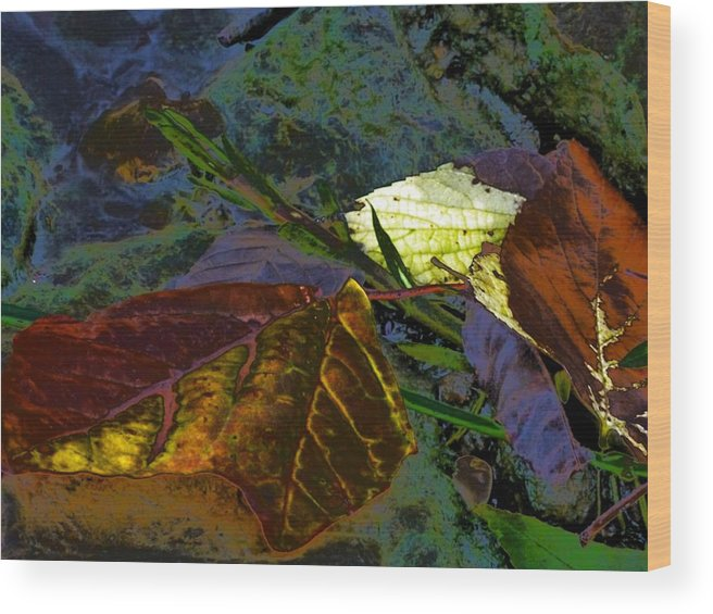 Fall Leaves Abstraction Wood Print featuring the photograph Fall Leaves Abstraction by Beth Akerman