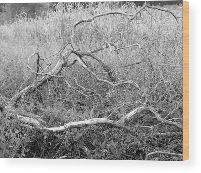 Tree Wood Print featuring the photograph Fallen by Emeraldcoast Gallery