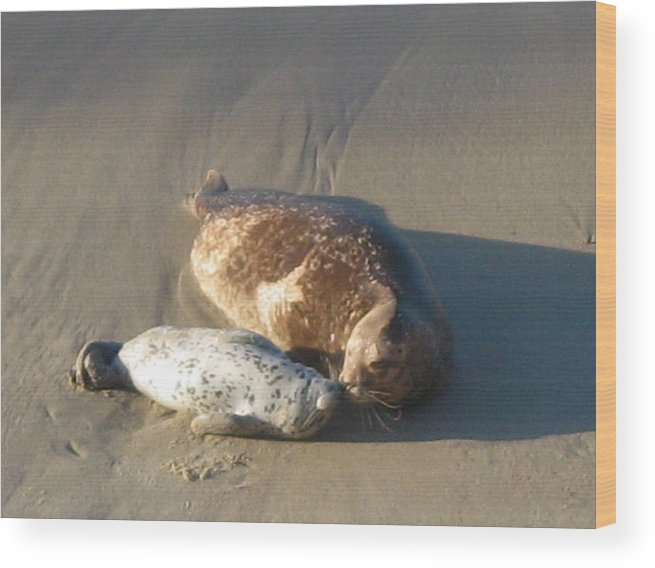 Seal Wood Print featuring the photograph Family Love by Ruth Edward Anderson