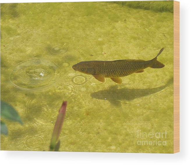 Fish Wood Print featuring the photograph Fish In A Pond by Yury Bashkin
