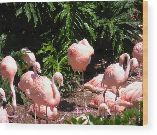 Birds Wood Print featuring the photograph Flamigo Gathering by Maria Bonnier-Perez