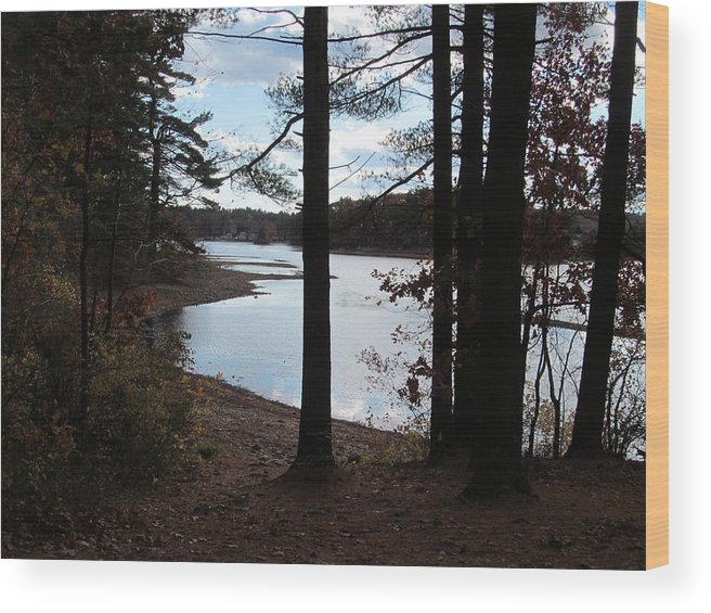 Nature Wood Print featuring the photograph Follow Me by Loretta Pokorny