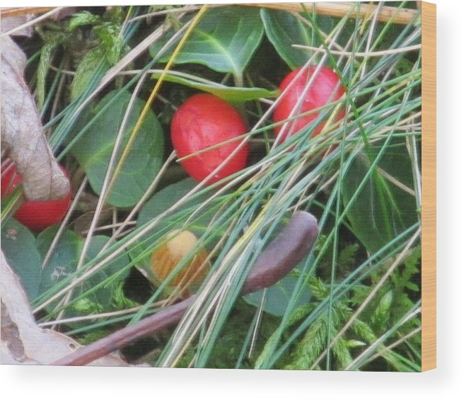 Nature Wood Print featuring the photograph Forest Floor by Loretta Pokorny