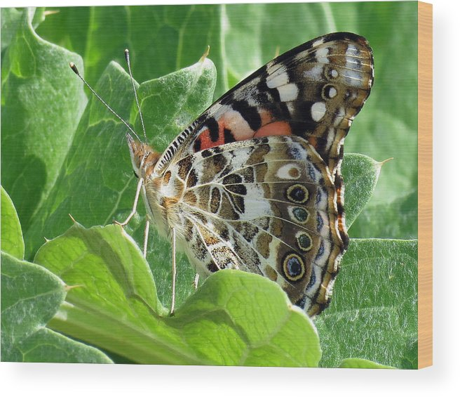 Butterfly Wood Print featuring the photograph Frittary Among The Green by Darleen Stry