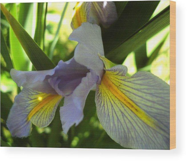 Photograph Flowers Wood Print featuring the photograph Garden Iris by Janice Robertson