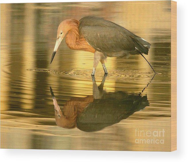 Birds Wood Print featuring the photograph Golden Reflection by Myrna Bradshaw