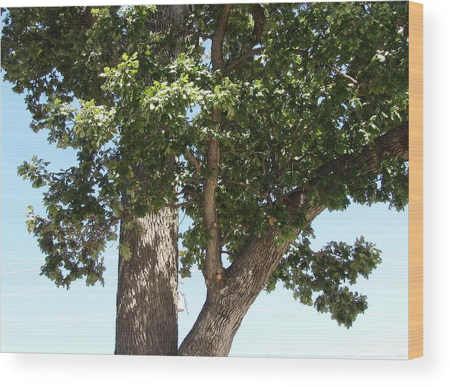 Oak Tree Planted By My Great Grandfather Wood Print featuring the photograph Great Grandfathers Tree by Shawn Hughes