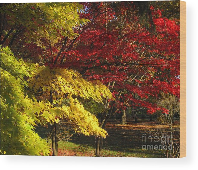 Autumn Wood Print featuring the photograph Green Yellow Red by Bruce Borthwick