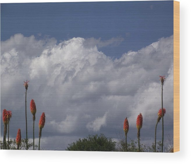 Clouds Wood Print featuring the photograph growing in Him by Rani De Leeuw
