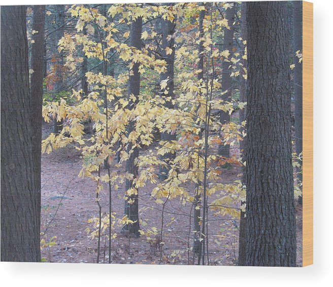 Nature Wood Print featuring the photograph Growing Up by Loretta Pokorny