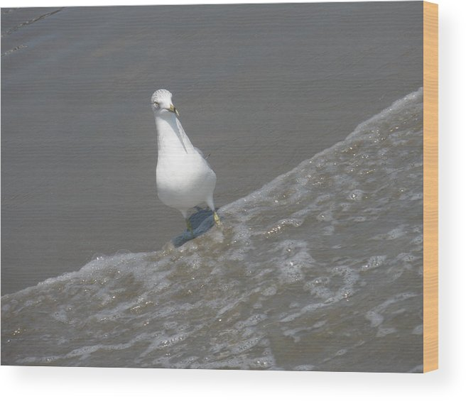 Wood Print featuring the photograph Happy Gull by Tracy Fusco