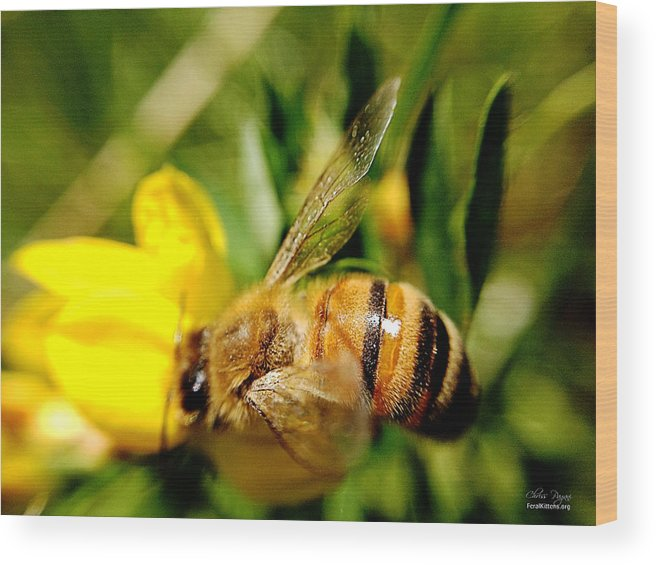 Honey Bee Wood Print featuring the photograph Honey Bee by Chriss Pagani