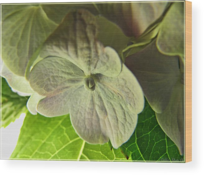 Nature Wood Print featuring the photograph Hydrangea Macro by Debbie Portwood