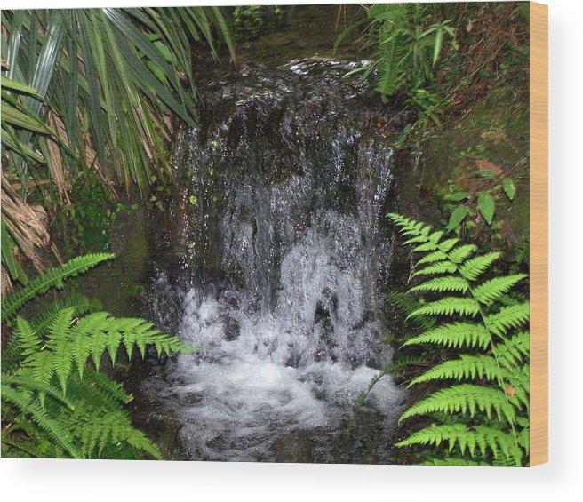 Landscape Wood Print featuring the photograph Jungle Falls IIi by Cheryl Matthew