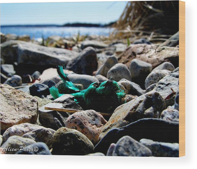 Green Wood Print featuring the photograph Knot What You Know by Chris Randall