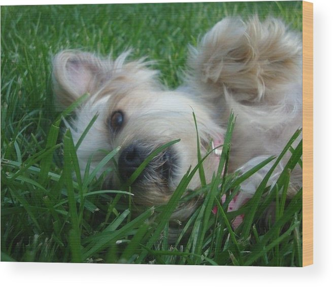 Yorkie Wood Print featuring the photograph Lazy Dog by Bobby Martin