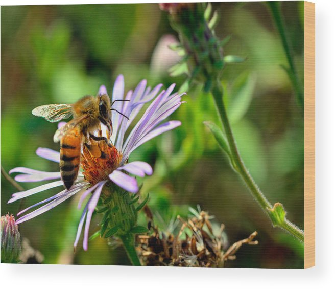 Macro Wood Print featuring the photograph Lick Of A Bee by Jenny Ellen Photography