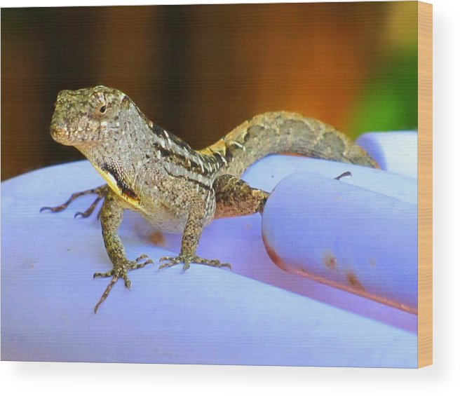Lizard Wood Print featuring the photograph Lizard On The Pipe by Laura Holt