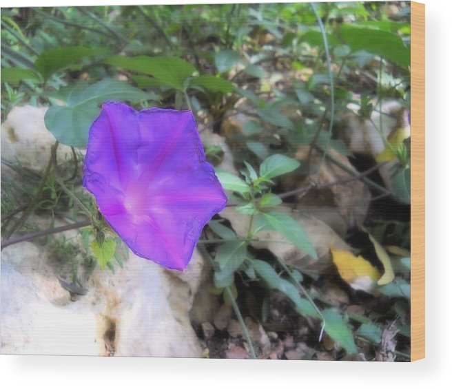 Violet Wood Print featuring the photograph Lonely Violet by Lynnette Johns