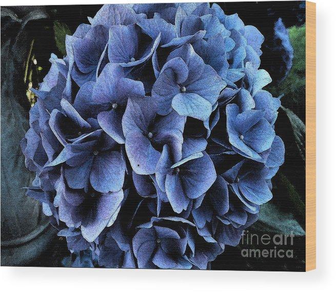 Hydrangea Wood Print featuring the photograph Midnight Hydrangea by Marion Headrick