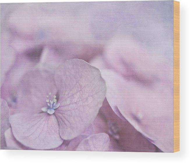 Pink Wood Print featuring the photograph Mop-head by Cheryl Butler